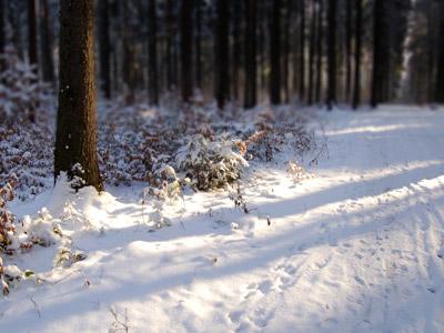 Wald im Winter
